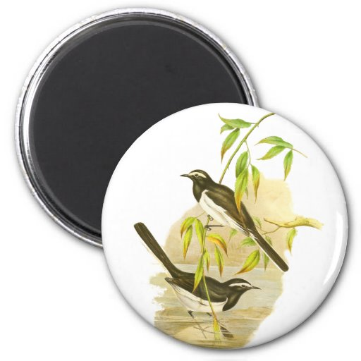 Large Pied Wagtail 2 Inch Round Magnet