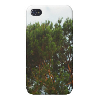 Large Pine Tree iPhone Case Case For iPhone 4