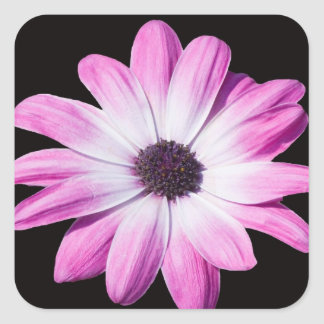 Large Pink Abstract Daisy Square Sticker