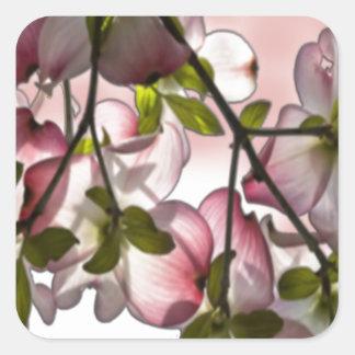 Large Pink Dogwood Flowers Square Sticker