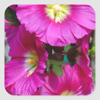 Large Pink Lily Square Sticker