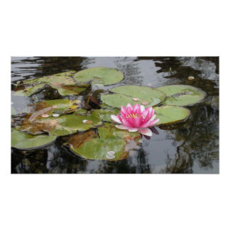 Large Pink Water Lily Photograph Printed on Canvas Poster