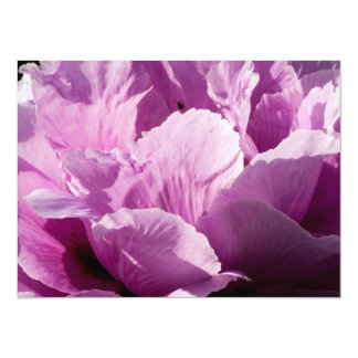 Large Purple Peony Flower Card