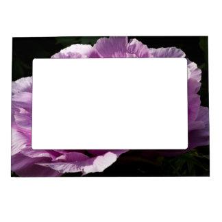 Large Purple Peony Flower Magnetic Frame