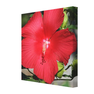 Large Red Hibiscus on a Bright Sunny Day Gallery Wrap Canvas