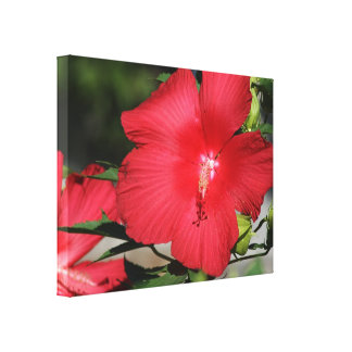 Large Red Hibiscus on a Bright Sunny Day Stretched Canvas Prints