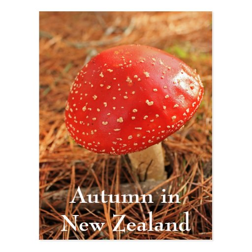 Large red toadstool, Autumn in New Zealand Postcard