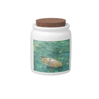 large river turtle swimming candy jars