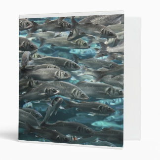 Large school of fish close up binder