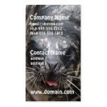 Large Seal Business Cards