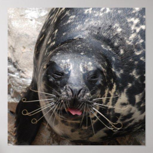Large Seal Poster