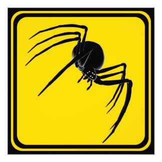 Large Spider Crossing! Photo Print