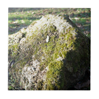 Large stone mossy boulder at  forest lawn tile