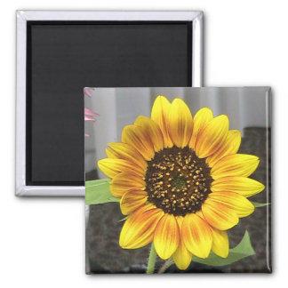 Large Sunflower design - round or square Refrigerator Magnet