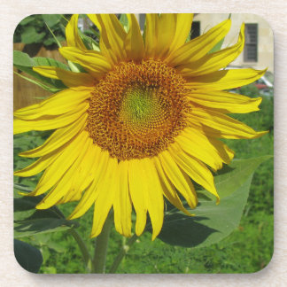 Large sunflower drink coaster
