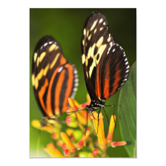 """Large tiger butterflies 5"""" x 7"""" invitation card"""