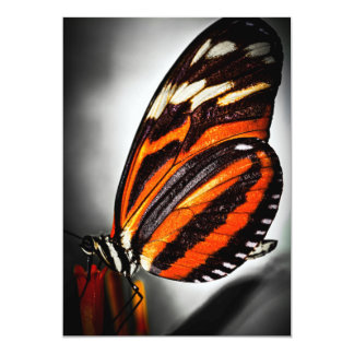 """Large tiger butterfly 5"""" x 7"""" invitation card"""