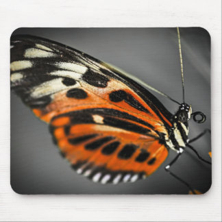 Large tiger butterfly mouse pad