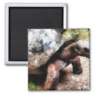 Large tortoise 2 inch square magnet