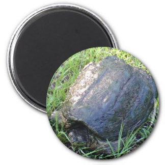 Large Tortoise magnet