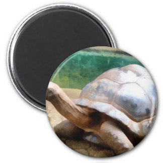 Large tortoise with head up 2 inch round magnet