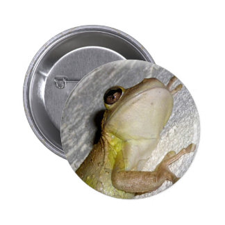 Large tree frog clinging to stucco wall photo button