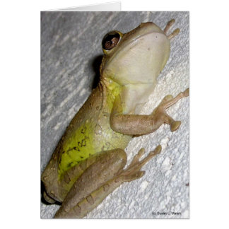 Large tree frog clinging to stucco wall photo greeting cards