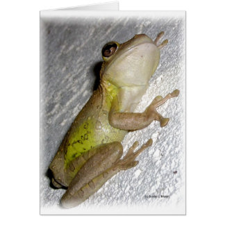 Large tree frog clinging to stucco wall photo greeting card