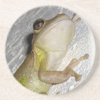Large tree frog clinging to stucco wall photo coasters