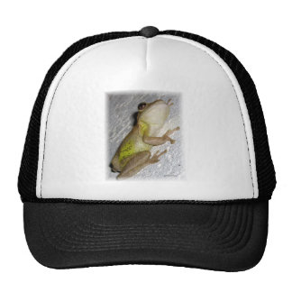 Large tree frog clinging to stucco wall photo hat