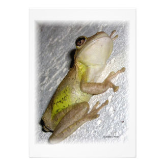 Large tree frog clinging to stucco wall photo announcement