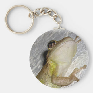 Large tree frog clinging to stucco wall photo key chain