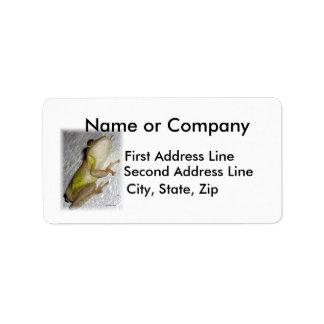 Large tree frog clinging to stucco wall photo personalized address label