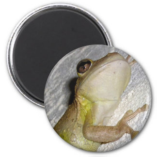 Large tree frog clinging to stucco wall photo magnet