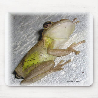 Large tree frog clinging to stucco wall photo mouse pad