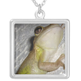 Large tree frog clinging to stucco wall photo pendant