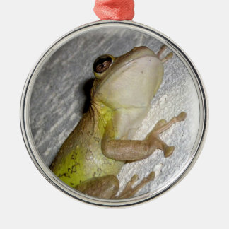 Large tree frog clinging to stucco wall photo christmas ornament