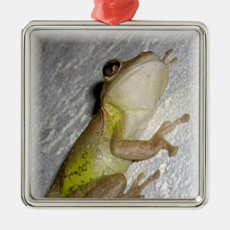 Large tree frog clinging to stucco wall photo christmas tree ornament