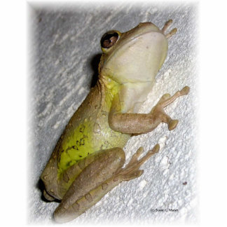 Large tree frog clinging to stucco wall photo photo sculpture