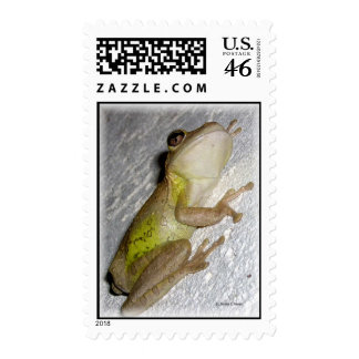 Large tree frog clinging to stucco wall photo postage stamp