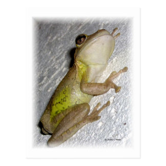 Large tree frog clinging to stucco wall photo postcards