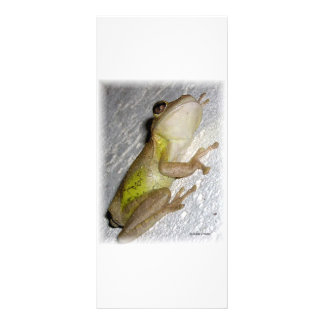 Large tree frog clinging to stucco wall photo rack card template