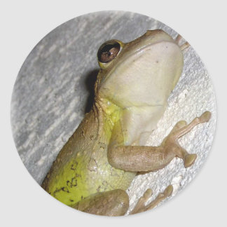 Large tree frog clinging to stucco wall photo stickers
