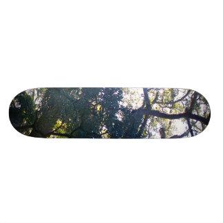 Large Tree Skate Boards