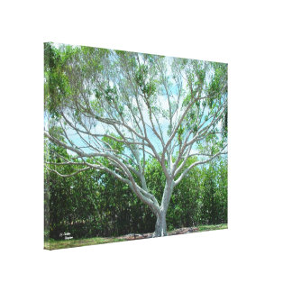 Large tree Stretched Canvas Print