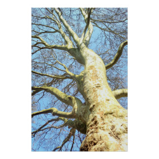 Large Tree with many branches in the sky, Nature Poster
