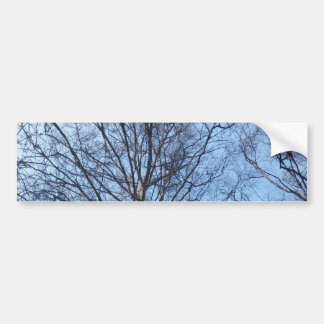 Large Trees in The Sky, Nature, Tree, Forest Bumper Sticker