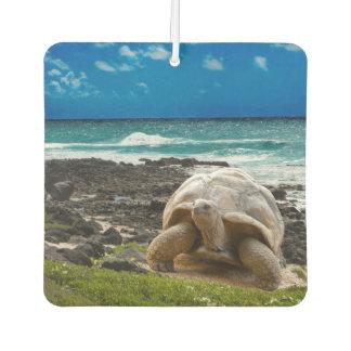 Large turtle at the sea edge