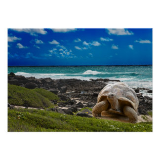 Large turtle at the sea edge poster