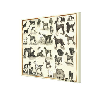 Large Vintage Dog Breeds Vets and Dog lovers Hound Canvas Print